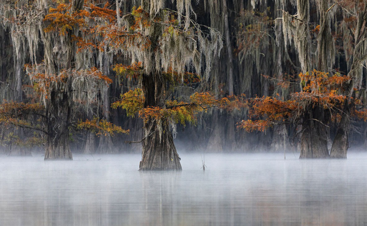 צילום: Doron Talmi / World Nature Photography Awards