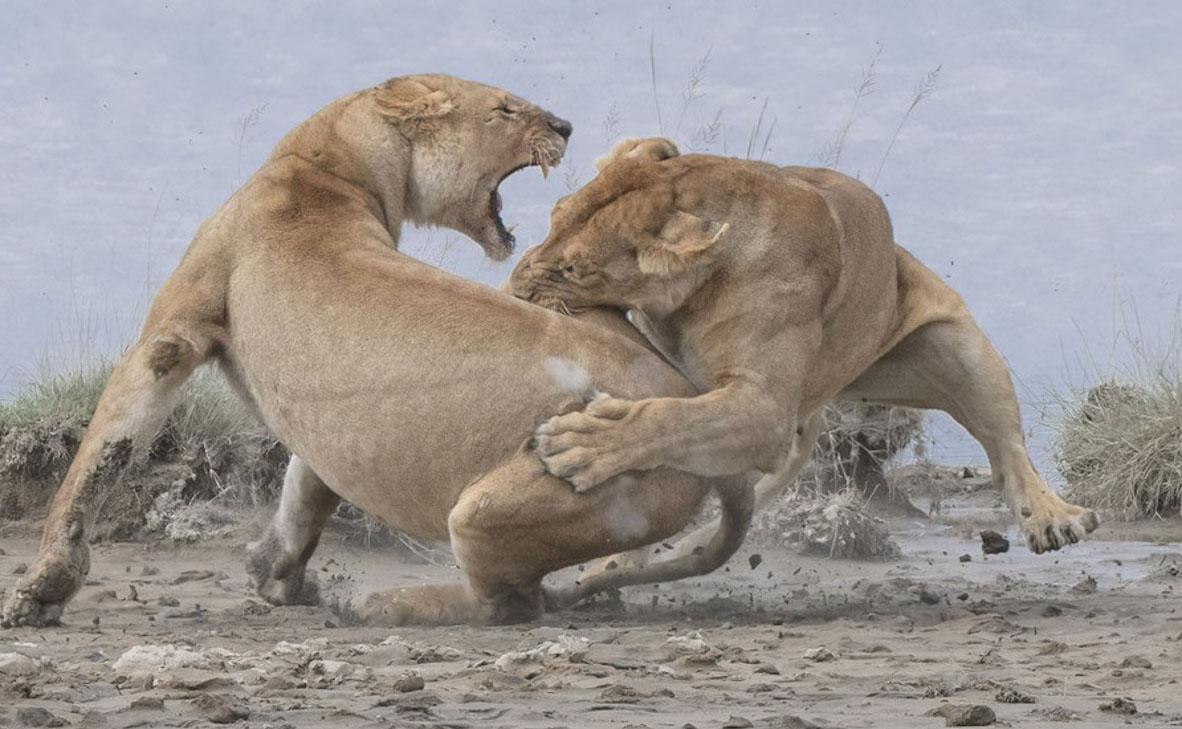 צילום: Patrick Nowotny / World Nature Photography Awards