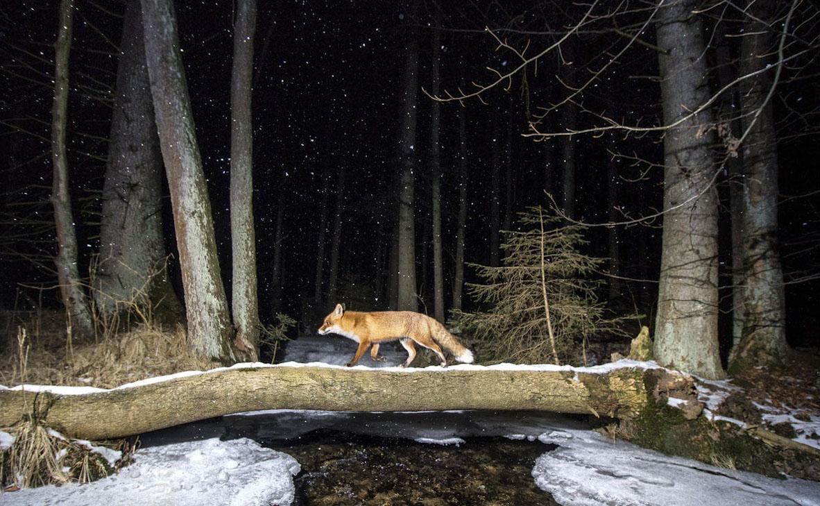 צילום: Vladimir Cech / World Nature Photography Awards