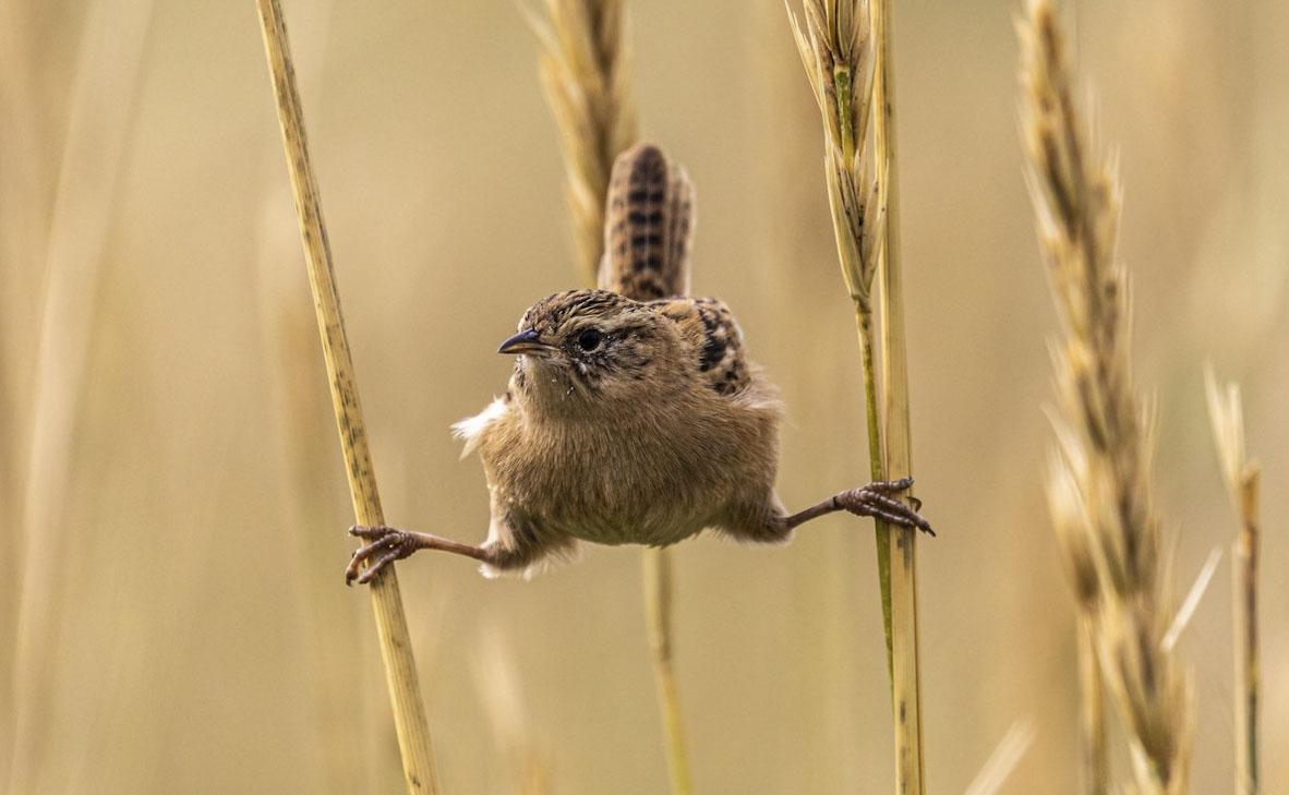 צילום: Andy Pollard / World Nature Photography Awards
