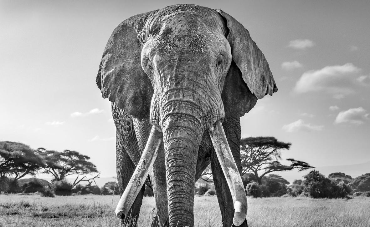 צילום: Harry Skeggs / World Nature Photography Awards