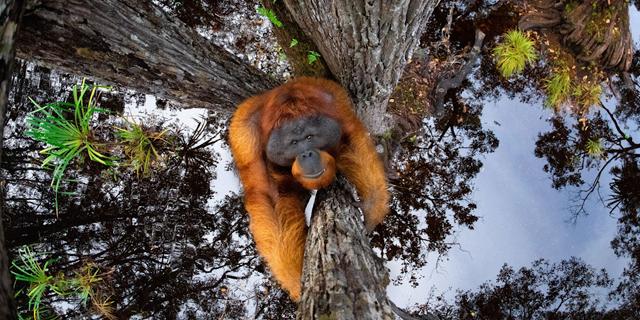 חי, צומח, דומם: תמונות זוכות מתחרות צילומי טבע