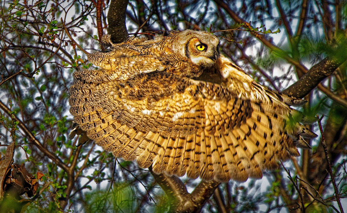 צילום: Dale Paul / World Nature Photography Awards