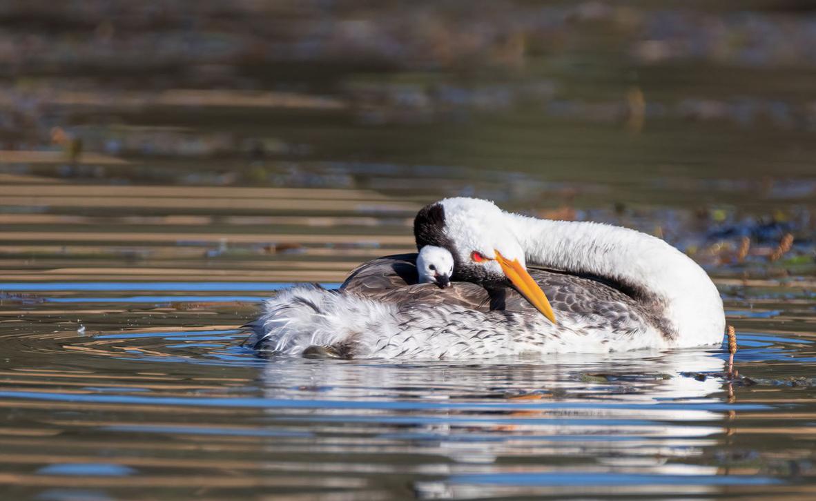 צילום: Lisa Roeder / World Nature Photography Awards