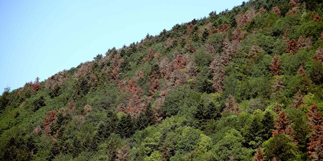 יער בצרפת שחלק מהעצים בו נפגעו מבצורת, צילום: איי אף פי