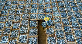 פוטו תחרות צילומים של סוני 2021 דגים מיובשים, צילום: Khanh Phan/Sony World Photography Awards