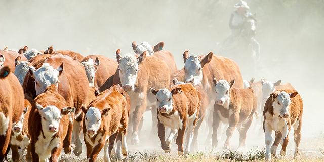 Israeli startups stampeding towards alternative meat solutions