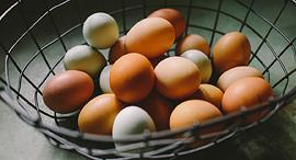 ביצים בסל אחד פיזור השקעות בורסה, צילום: Natalie Rhea Riggs / Unsplash