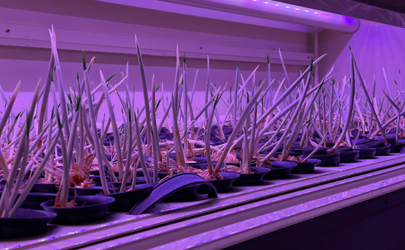 An example of one of the vertical farms. Photo: Saffron-Tech
