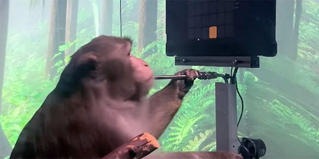 אלון מאסק מציג: קוף שמשחק במחשב - בכוח המחשבה בלבד
