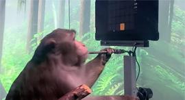 קוף משחק בכוח מחשבה נוירלינק Neuralink אלון מאסק, צילום: youtube