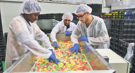 מפעל ל סוכריות טופ גאם ב שדרות, צילום: שאול גולן