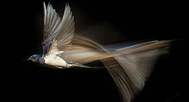 פוטו תחרות צילומי טבע ציפור, צילום: Karsten Mosebach/2021 GDT Nature Photographer of the Year