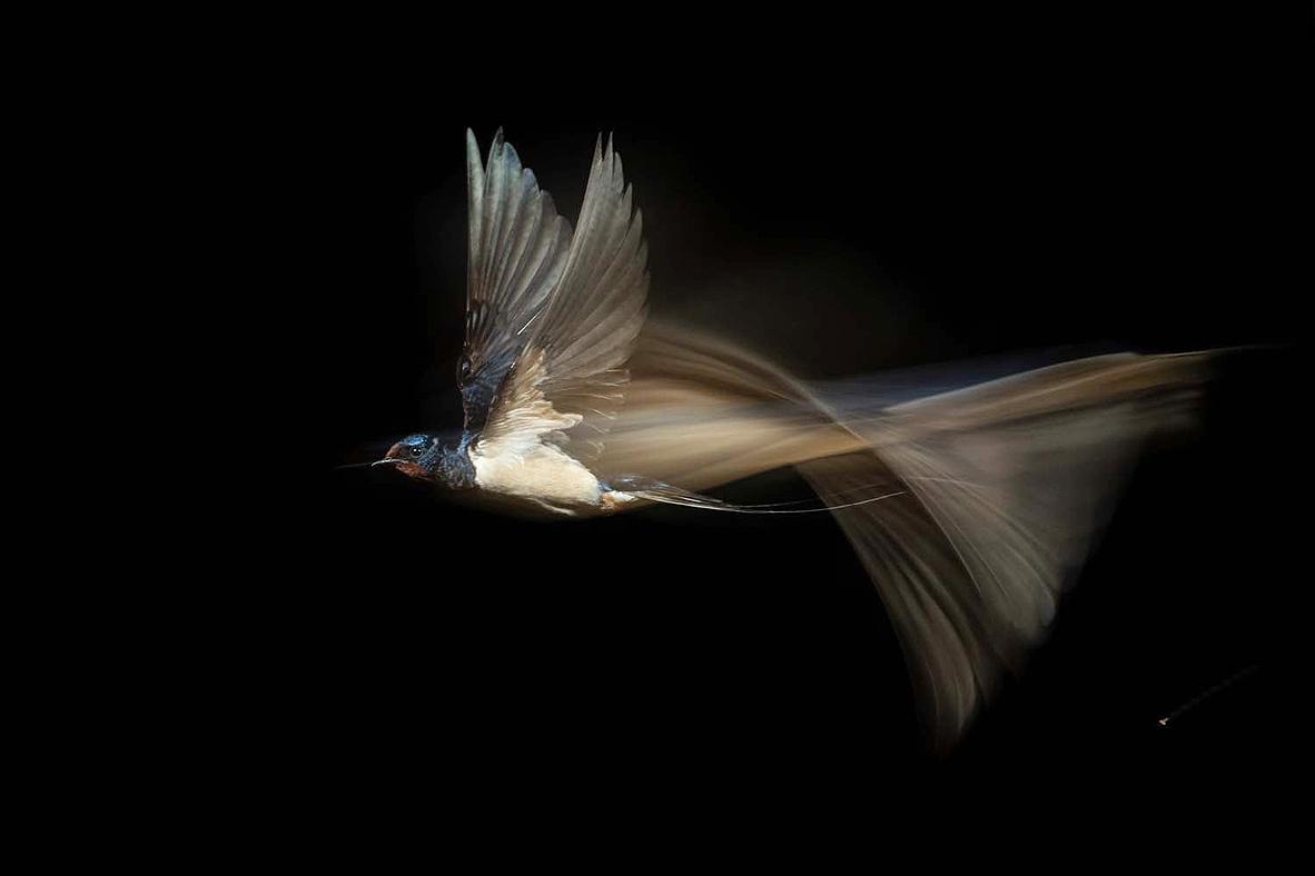 צילום: Karsten Mosebach/2021 GDT Nature Photographer of the Year