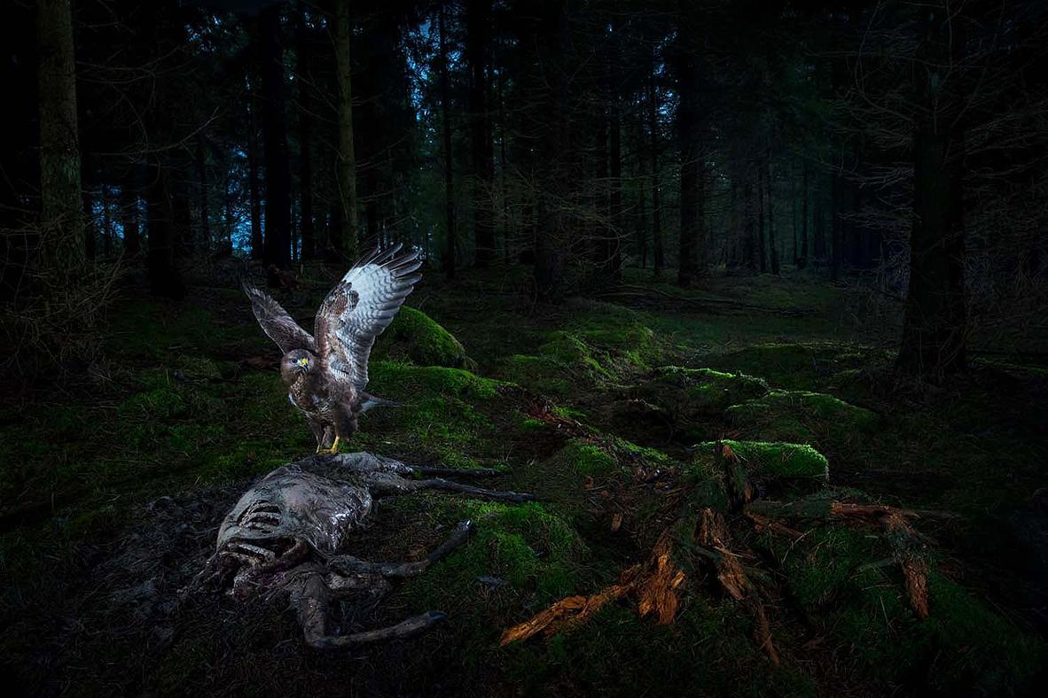 צילום: Florian Smit/2021 GDT Nature Photographer of the Year