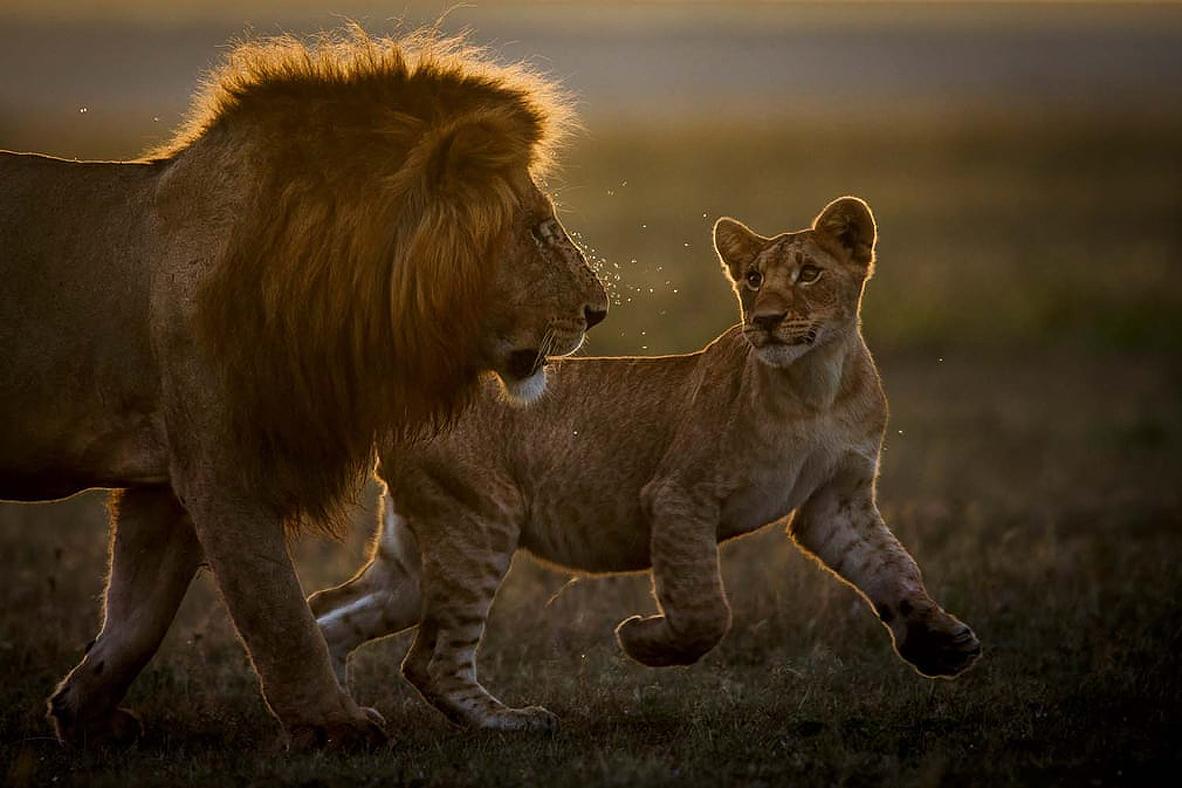 צילום: Peter Lindel/2021 GDT Nature Photographer of the Year