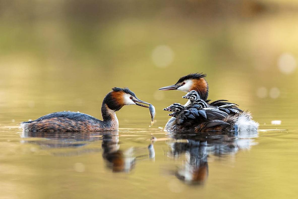 צילום: Corinna Leonbacher/2021 GDT Nature Photographer of the Year