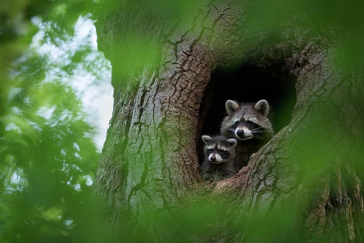 צילום: Dominik Janoschka/2021 GDT Nature Photographer of the Year