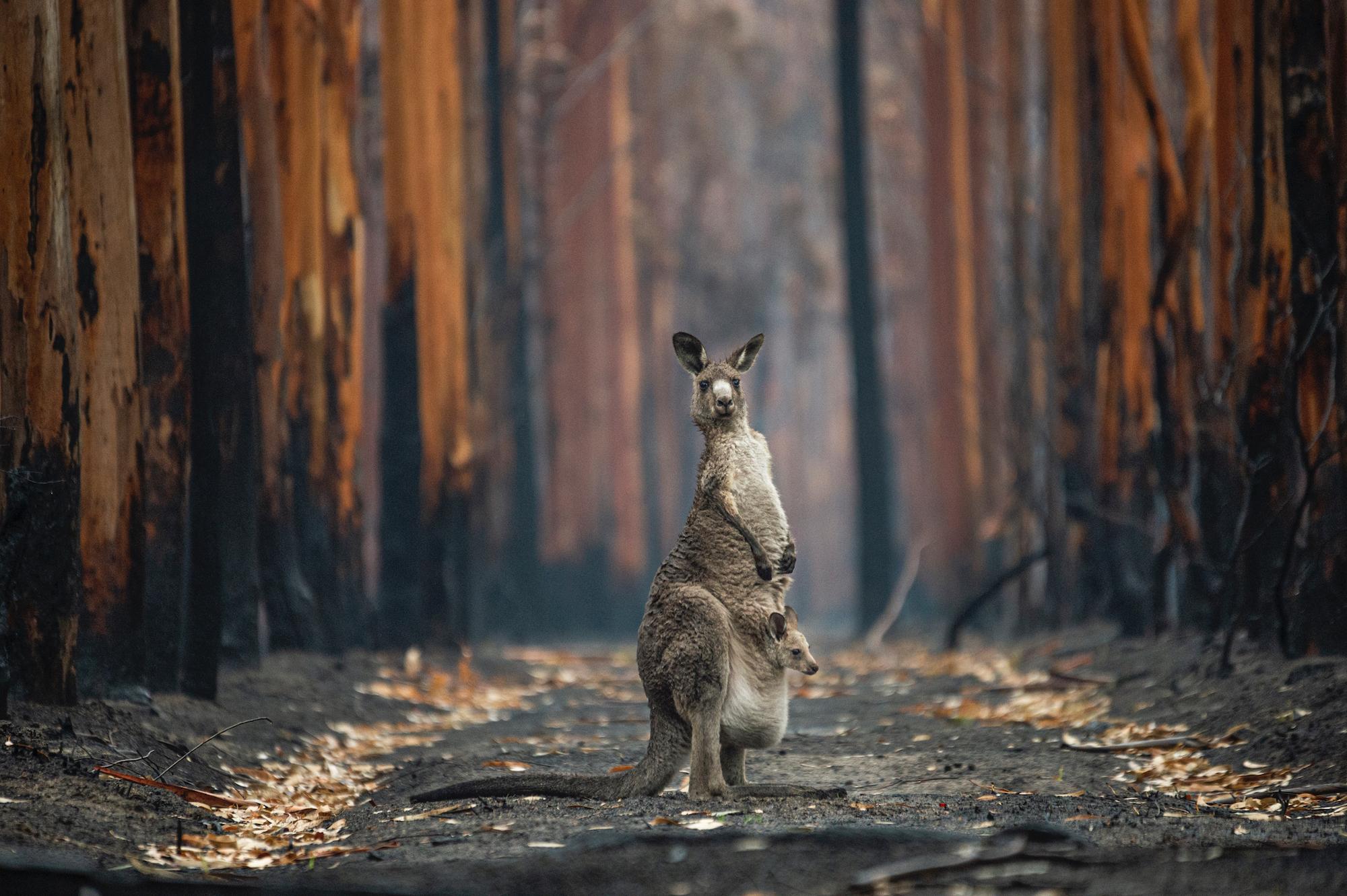 צילום: Jo-Anne McArthur - BigPicture Natural World Photography Competition