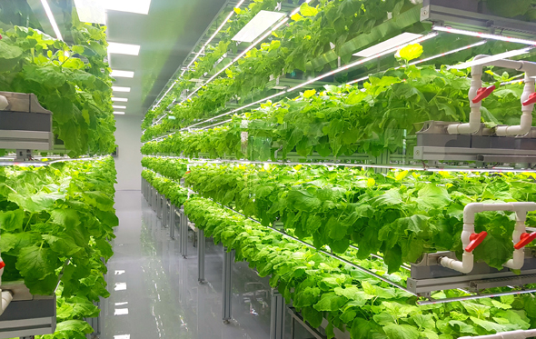 Infarm uses vertical farms to grow plants in greenhouses in city centers (illustration). Photo: Shutterstock