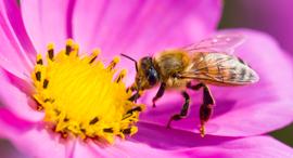 Bees. Photo: Shutterstock