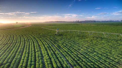 פרוספרה (PROSPERA) אגריטק, צילום: Pivot Field