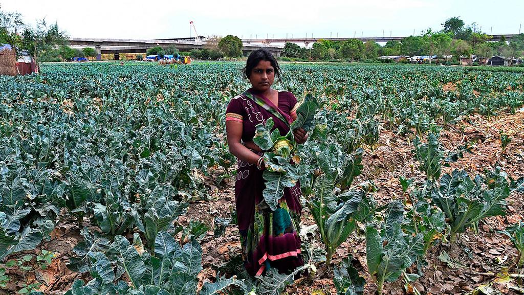 החקלאים בהודו חוששים: מיקרוסופט תפקיע מאיתנו אדמות - וגם את שיקול הדעת