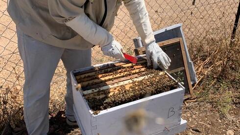 העלאת תעריף הגז הטבעי תידחה, הדבוראים יזכו להגנה: ועדת הכלכלה מקצצת את חוק ההסדרים
