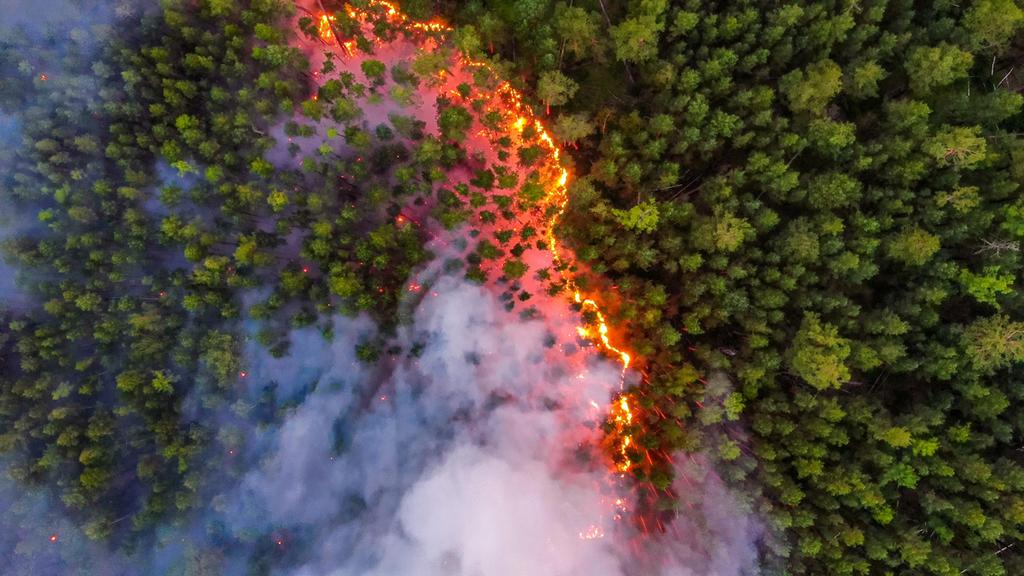 שריפות יער סיביר רוסיה באזור קרסנויארסק