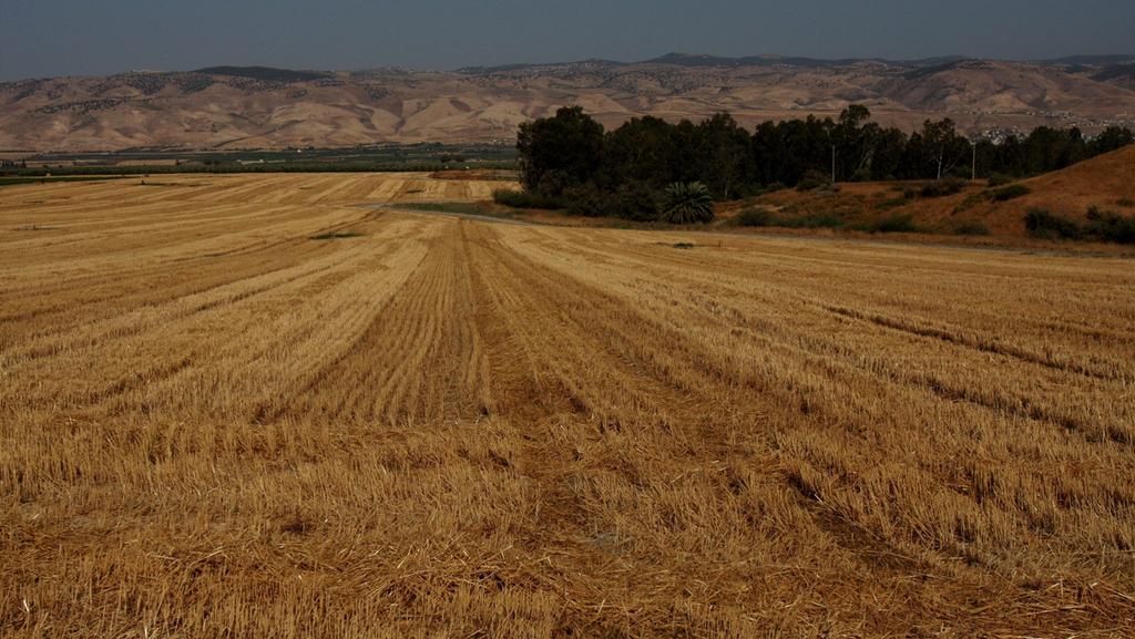 רשות המים ומקורות מתכסחות - וחקלאים תובעים 18 מיליון שקל בשל כשלים באספקה