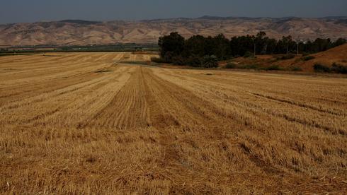 """נסללה הדרך לאישור חוק הוותמ""""ל: יוגבל גודל השטח החקלאי שעליו יתאפשר לבנות"""