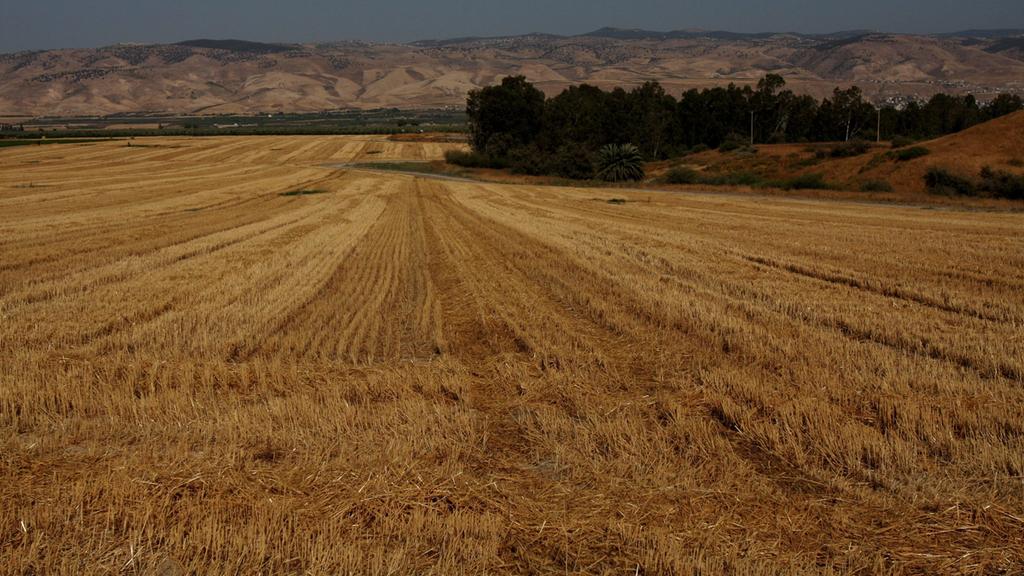 שטח חקלאי בקעת הירדן