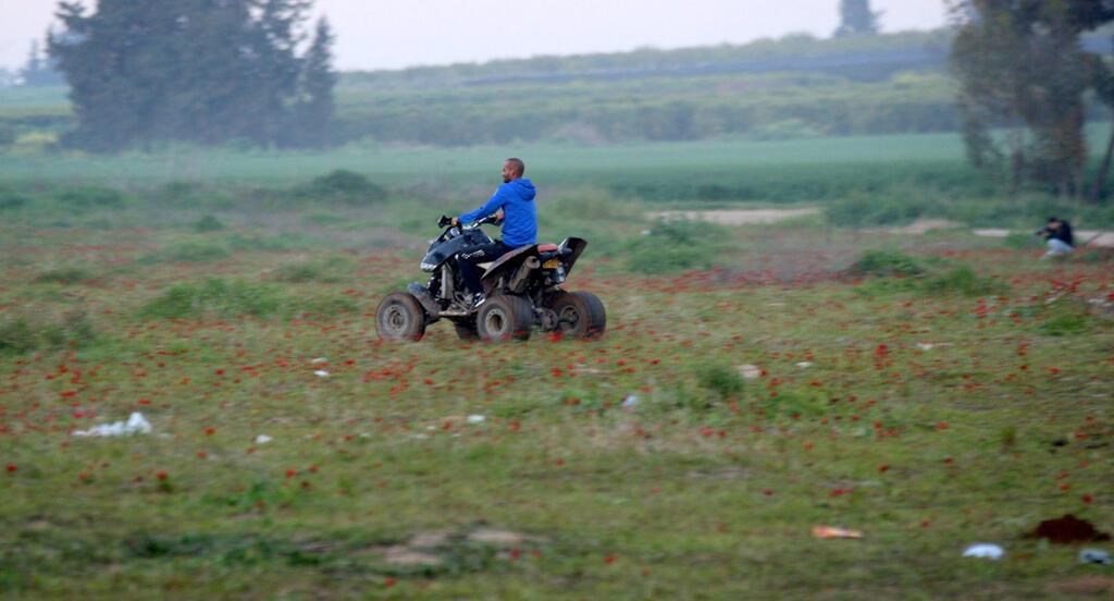צעיר נוהג ב טרקטורון בתוך שדה כלניות פנאי