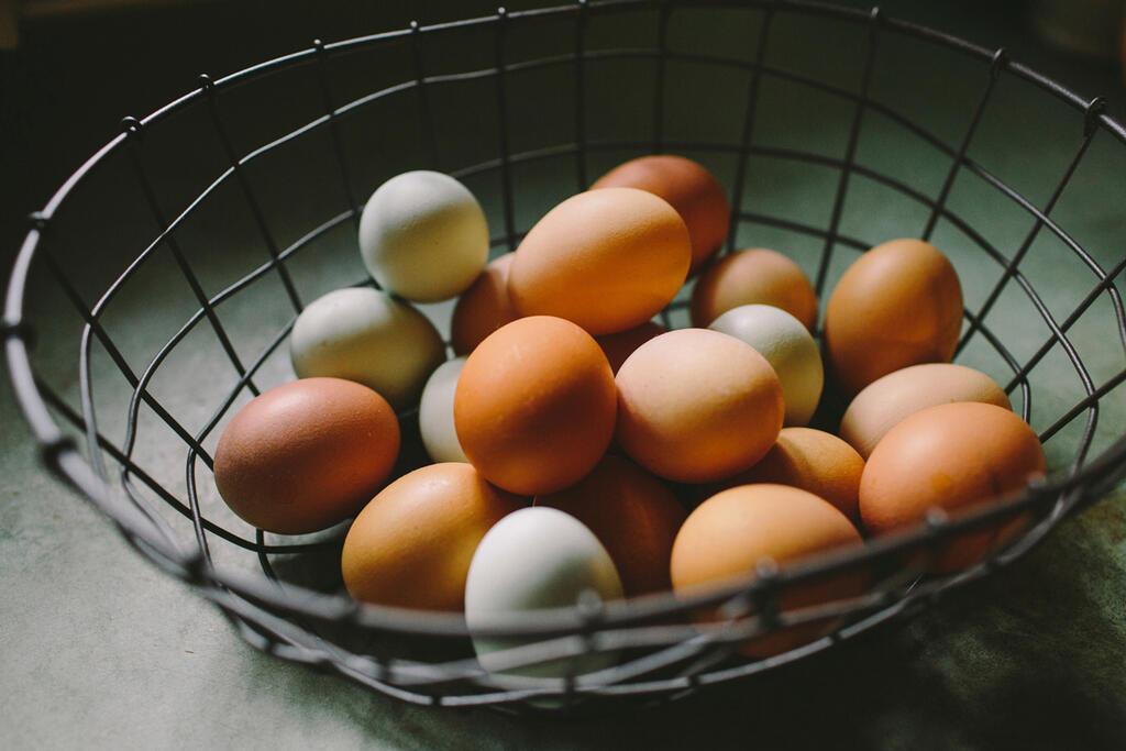 ביצים בסל אחד פיזור השקעות בורסה