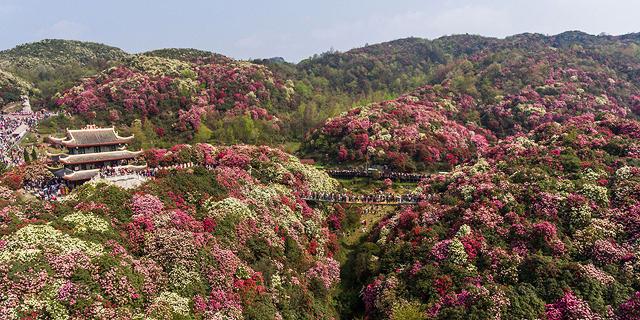 אביב העמים: תמונות של התחדשות ופריחה מהעולם