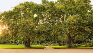 הגינות ב ארמון בקינגהאם בריטניה בית המלוכה מוכר כרטיסים לציבור הרחב 2, צילום: John Campbell