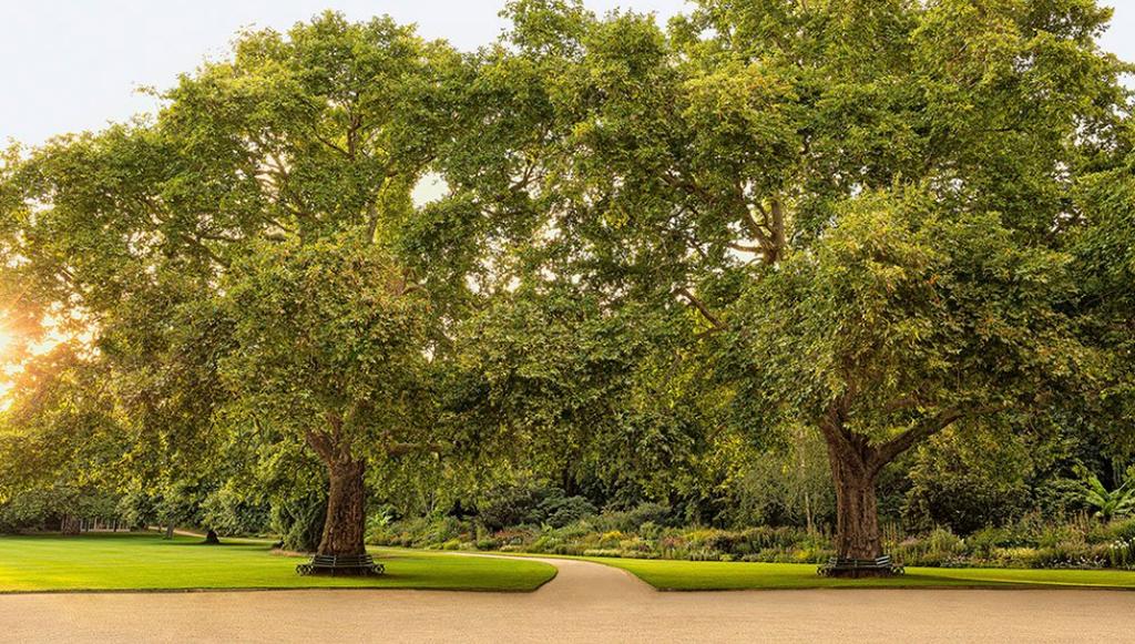 הגינות ב ארמון בקינגהאם בריטניה בית המלוכה מוכר כרטיסים לציבור הרחב 2