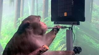 קוף משחק בכוח מחשבה נוירלינק Neuralink אלון מאסק