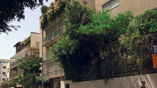 שדרות רוטשילד תל אביב, צילום: עמית שעל