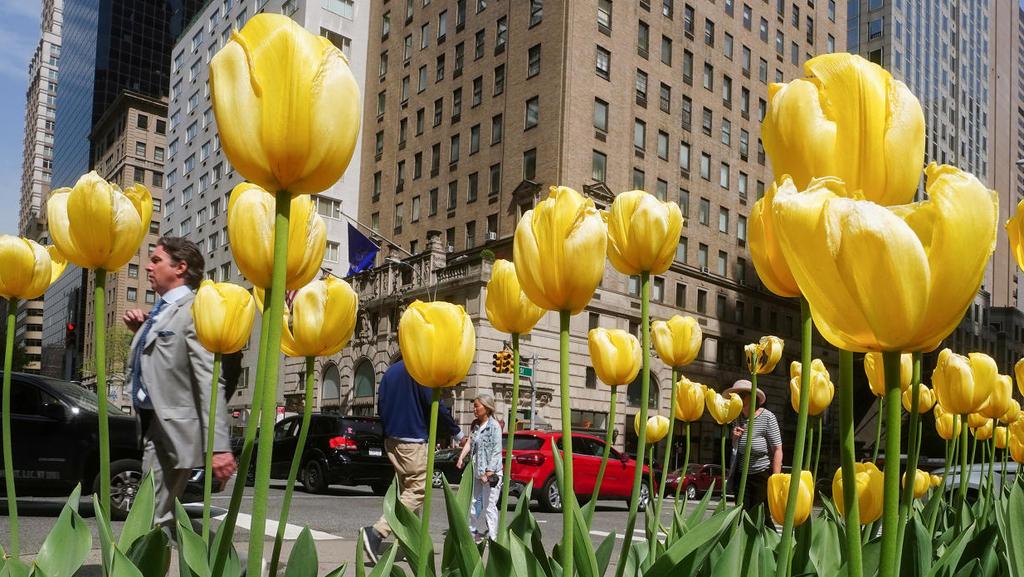 """אחרי הקורונה: ניו יורק מתעוררת ומתכוננת להיפתח ב""""פול פאוור"""""""