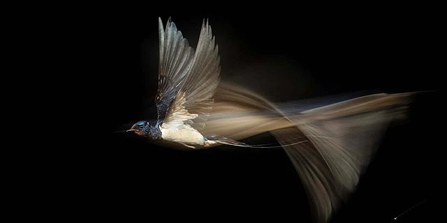 הראיתם, איזה יופי: תמונות זוכות מתחרות צילומי טבע