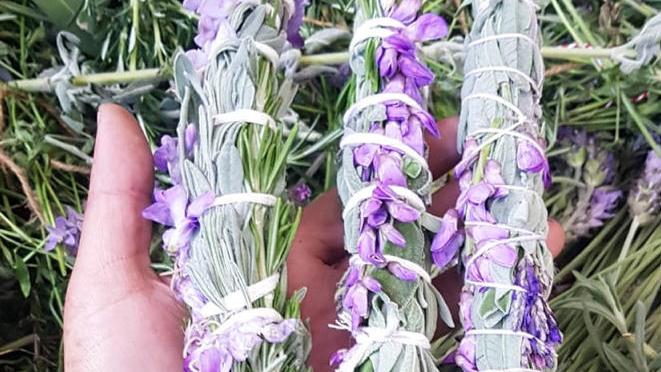 סדנאות צמחים בוניקה בונאנו