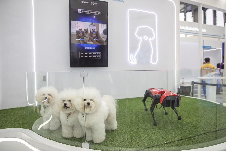 פוטו רובוטים כלבים