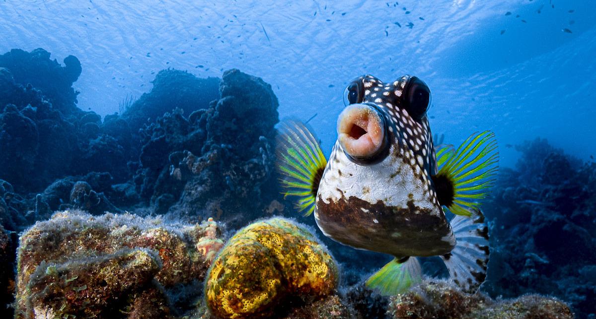 פוטו צילומים מצחיקים של חיות 2021 דג