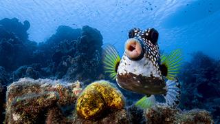פוטו צילומים מצחיקים של חיות 2021 דג , צילום: Philipp Stahr