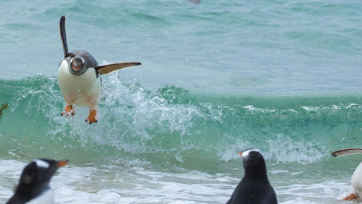 פוטו צילומים מצחיקים של חיות 2021 פינגווין