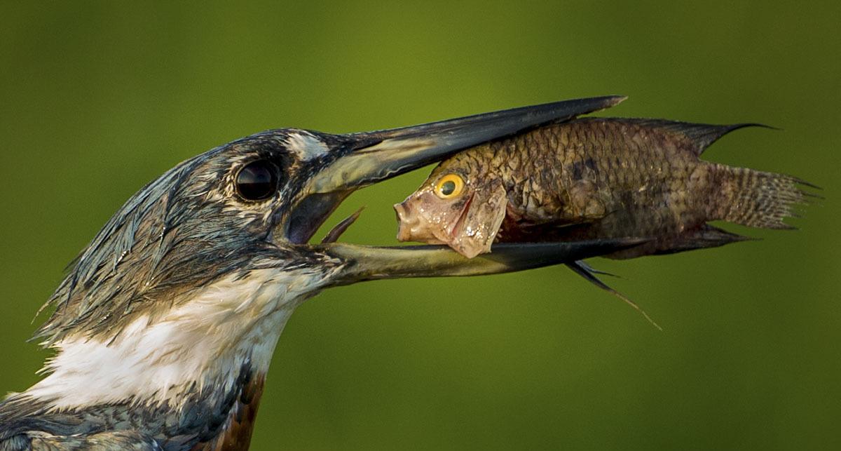 פוטו צילומים מצחיקים של חיות 2021 ציפור ודג