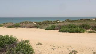 שטח תוכנית אשקלון חוף הים בין אשקלון ניצנים , צילום: גדי קבלו