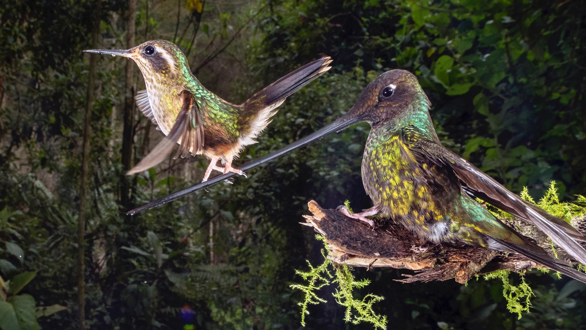 פוטו תמונות מתחרות BigPicture Natural World ציפור שיווי משקל