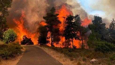2,650 דונם עלו באש תוך שעות: כוננות שריפות בהרי ירושלים